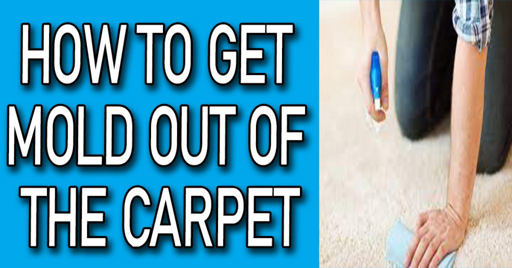 How to Get Mold Out of the Carpet